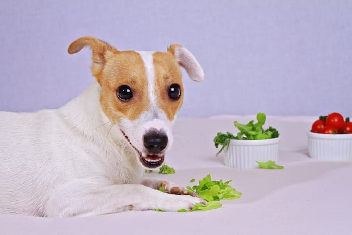 Image result for puppy with lettuce