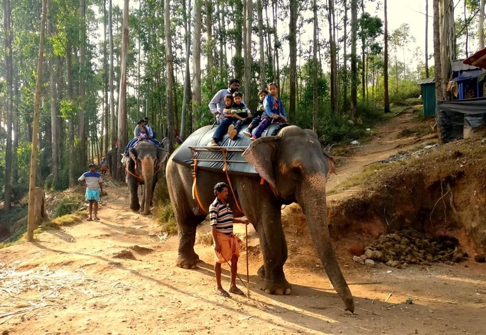 elephant-ride-k2ivswj6