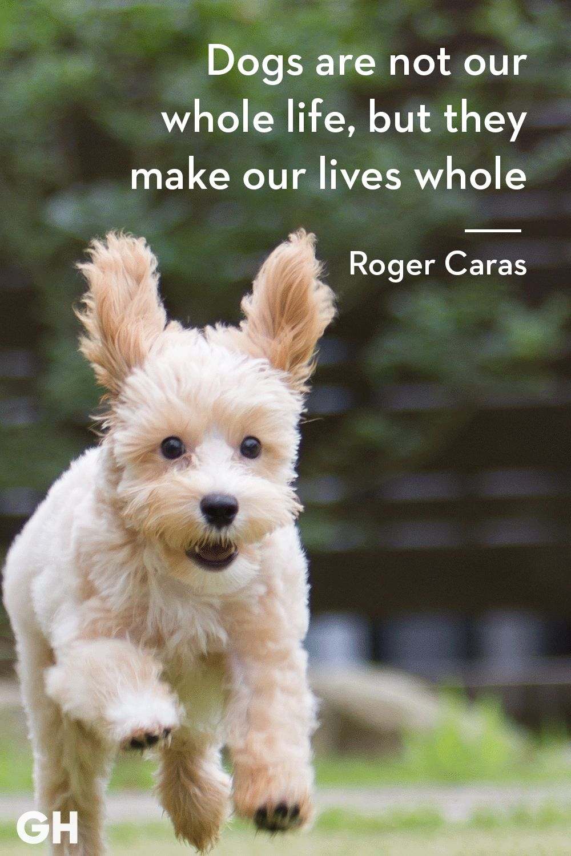 Short essay on my pet animal dog