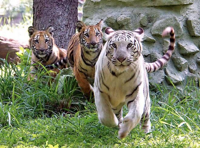 mysore-zoo-k0zhvosk