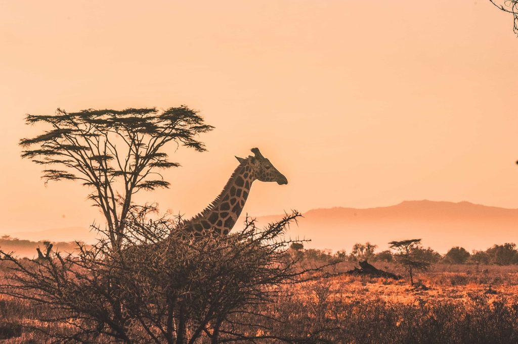 safari-k4cskm1m