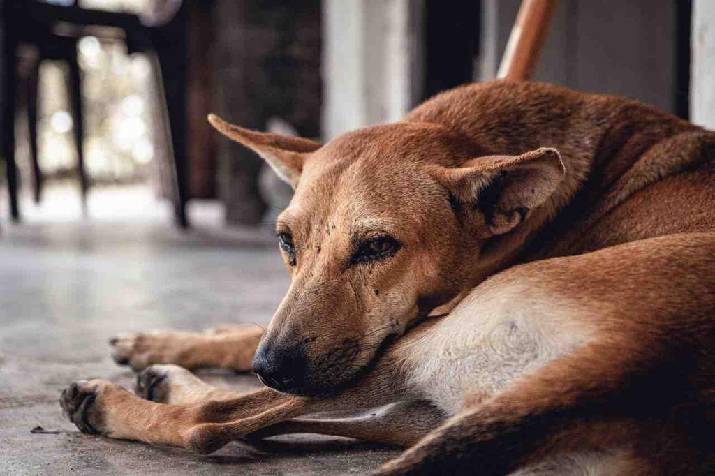 why-do-dogs-bark-at-night-k3sevfbn