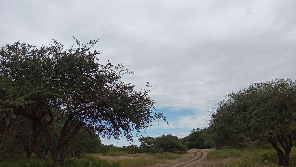 wildforestview-k2klg9wm